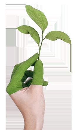 Hand_Pflanze